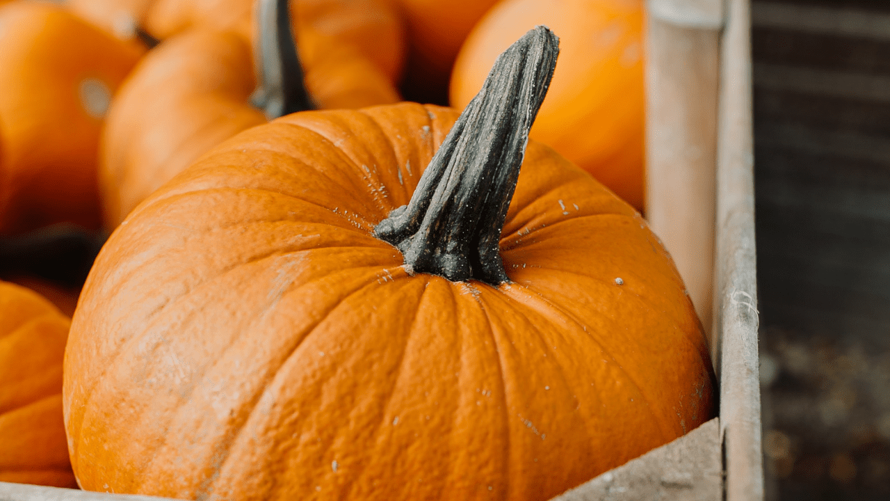 Halloween And Eating Disorder Recovery