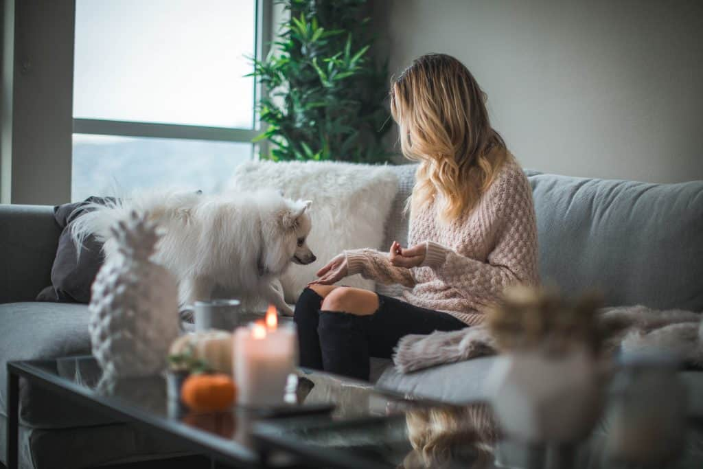 Young woman sitting on her couch with her white dog sniffing her palm
